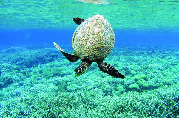Palma marina helps turtles