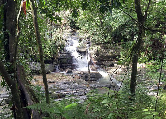 B10 Rainforest only