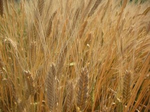 Take It In: More whole grains for a longer life