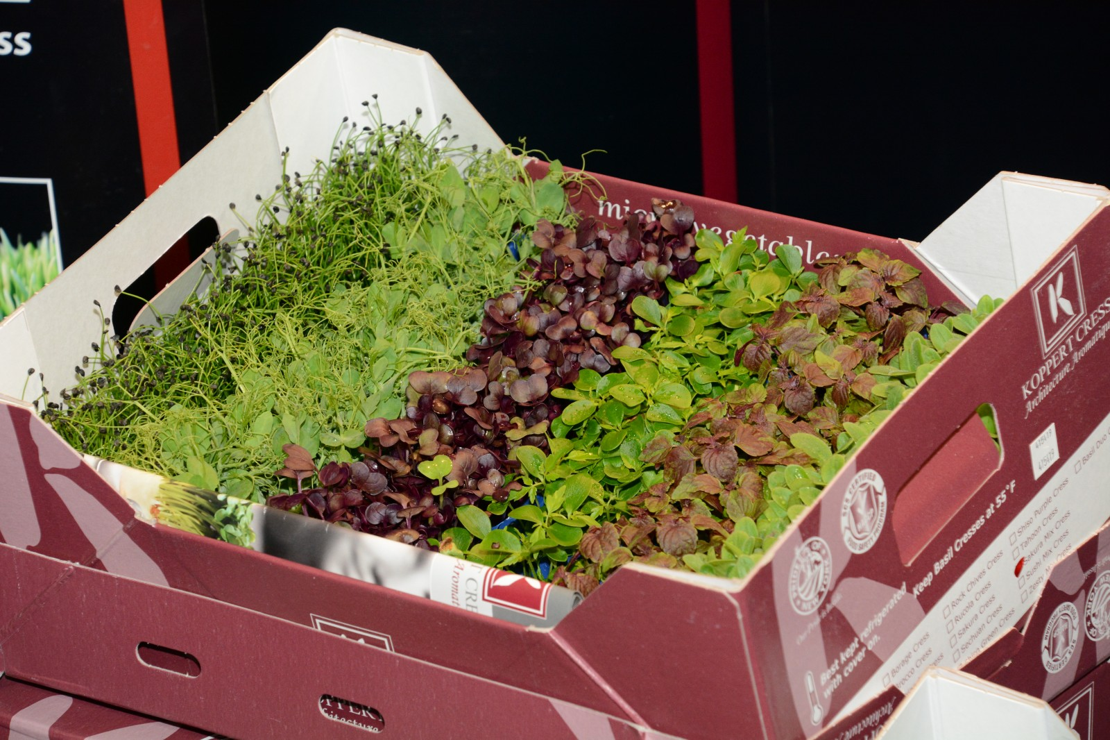 These are three photos of microgreens from Koppert Cress USA, which exhibited at the New York Produce Show in December. The person pictured is Koppert Cress USA's Natalia Gilligan. PHOTO/DEAN BARNES