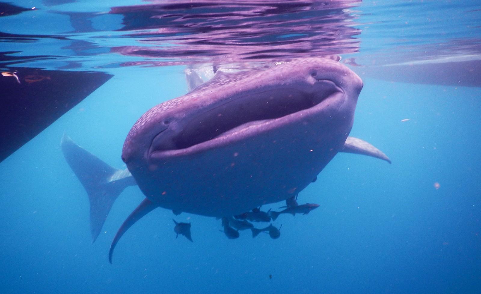 Rare and varied sea life blooms in Triton Bay, Indonesia | The Triton