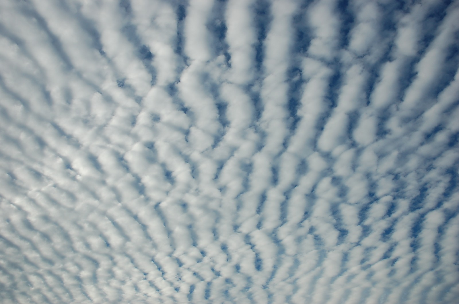 clouds mackerel (1)