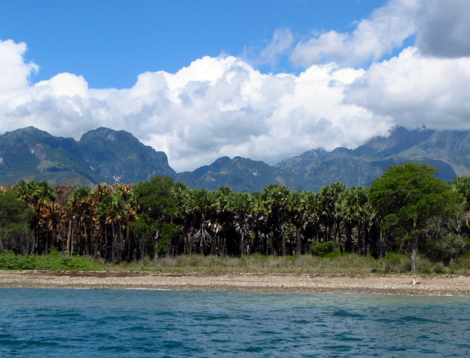 Mountains and palms on the isolated north coast of Timor-Leste