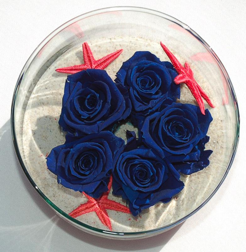 STOCK-blue-roses-red-starfi