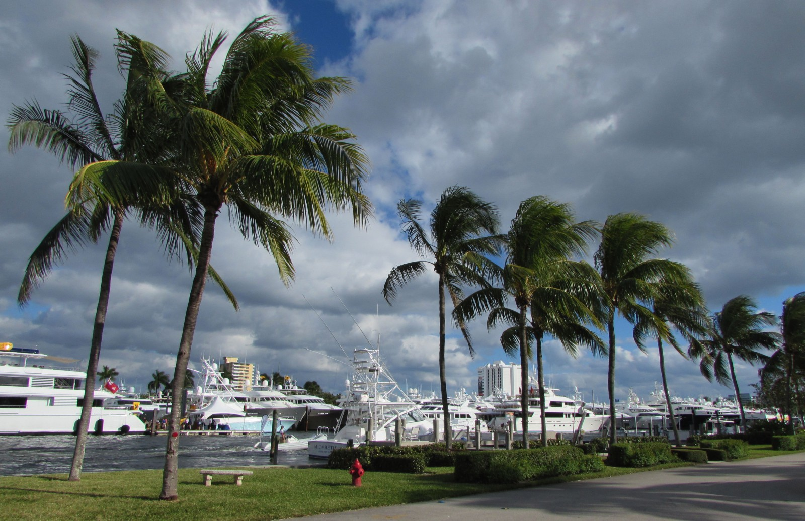 STOCK-palm-trees-boats