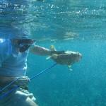 CUBA underwater (1)