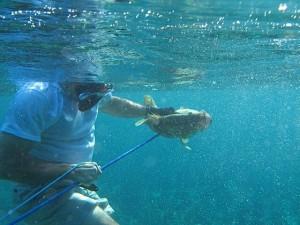 Visit the beauty of Cuba, underwater