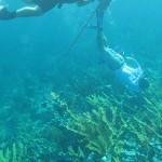 CUBA underwater