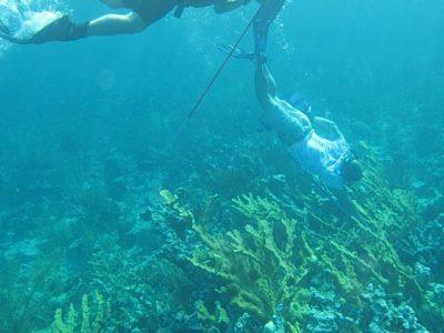 US Sailing, TropicSport promote reef-safe sunscreen