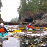 With Majestic Ocean Kayaking, participants explore a protected bay where bull kelp clusters. PHOTO/Majestic Ocean Kayaking