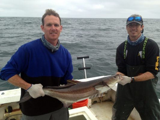 Anglers, be aware – tagged cobia in Florida waters
