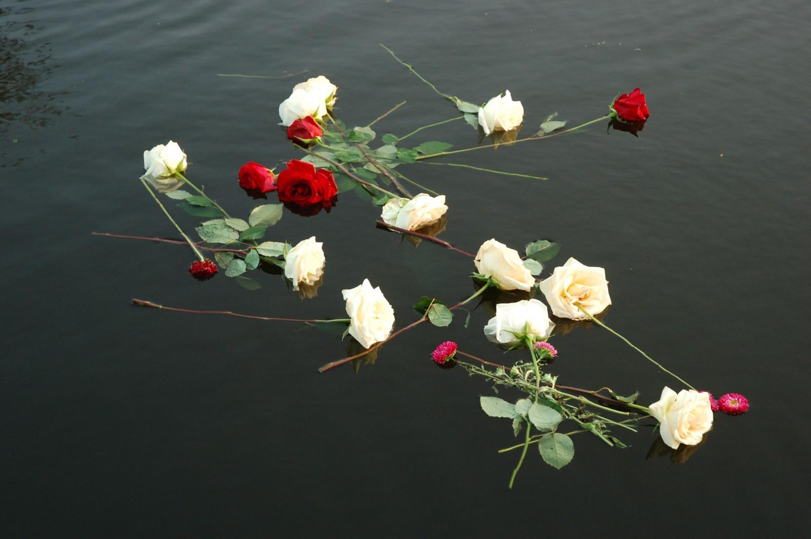 stock death flowers