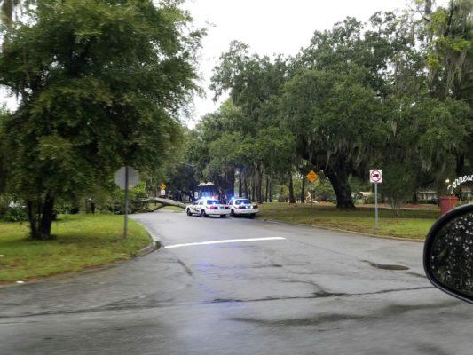 Tropical Storm Hermine's high winds hit Savannah yard
