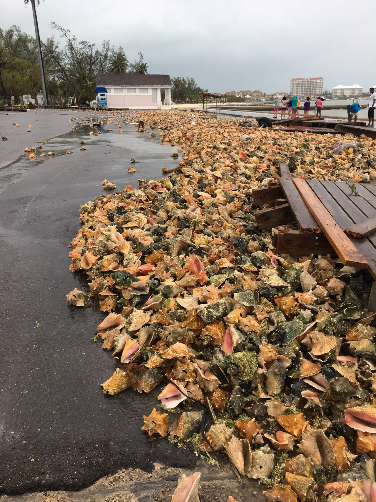 Empty conch shells were washed across a parking lot during Hurricane Matthew in Nassau, New Providence, in the Bahamas yesterday. PHOTO/BRIAN TURNQUEST