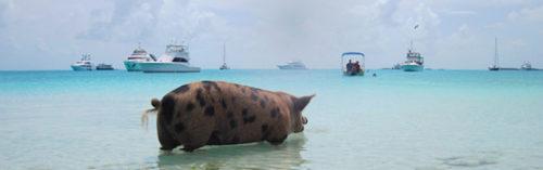 Staniel Cay Yacht Club | The Triton