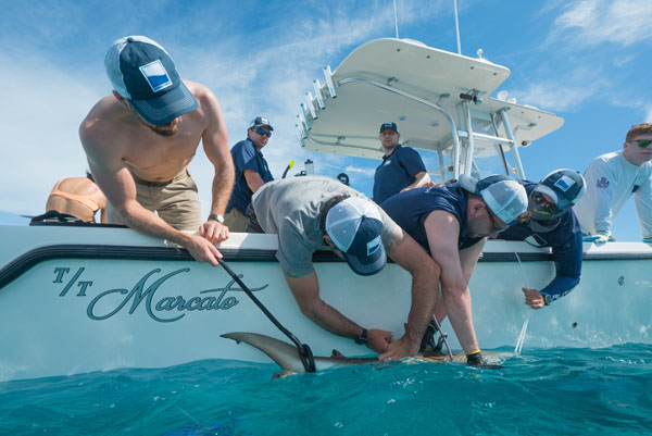 Charter offers M/Y Marcato crew shark 'tails'