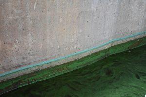 Green algae bloom arrives in Fort Lauderdale inland waters