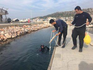 Turkey marina supports squid population