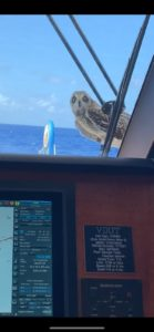 Crew Eye: An unexpected visitor in the Atlantic