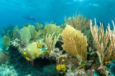 Diver assesses Bahamas reefs after hurricane