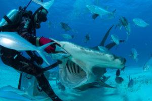Crew Eye: Captain at work underwater